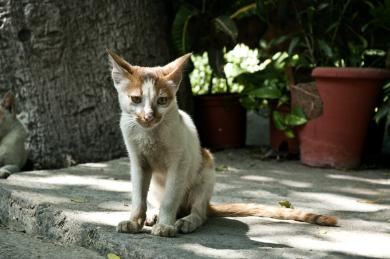 Proč kočka hubne?