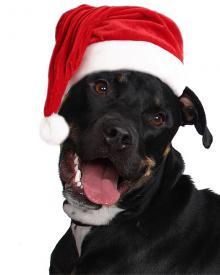 Super tipy na vianočné darčeky pre psov