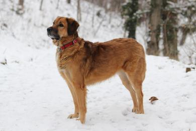 Zimná starostlivosť o psov