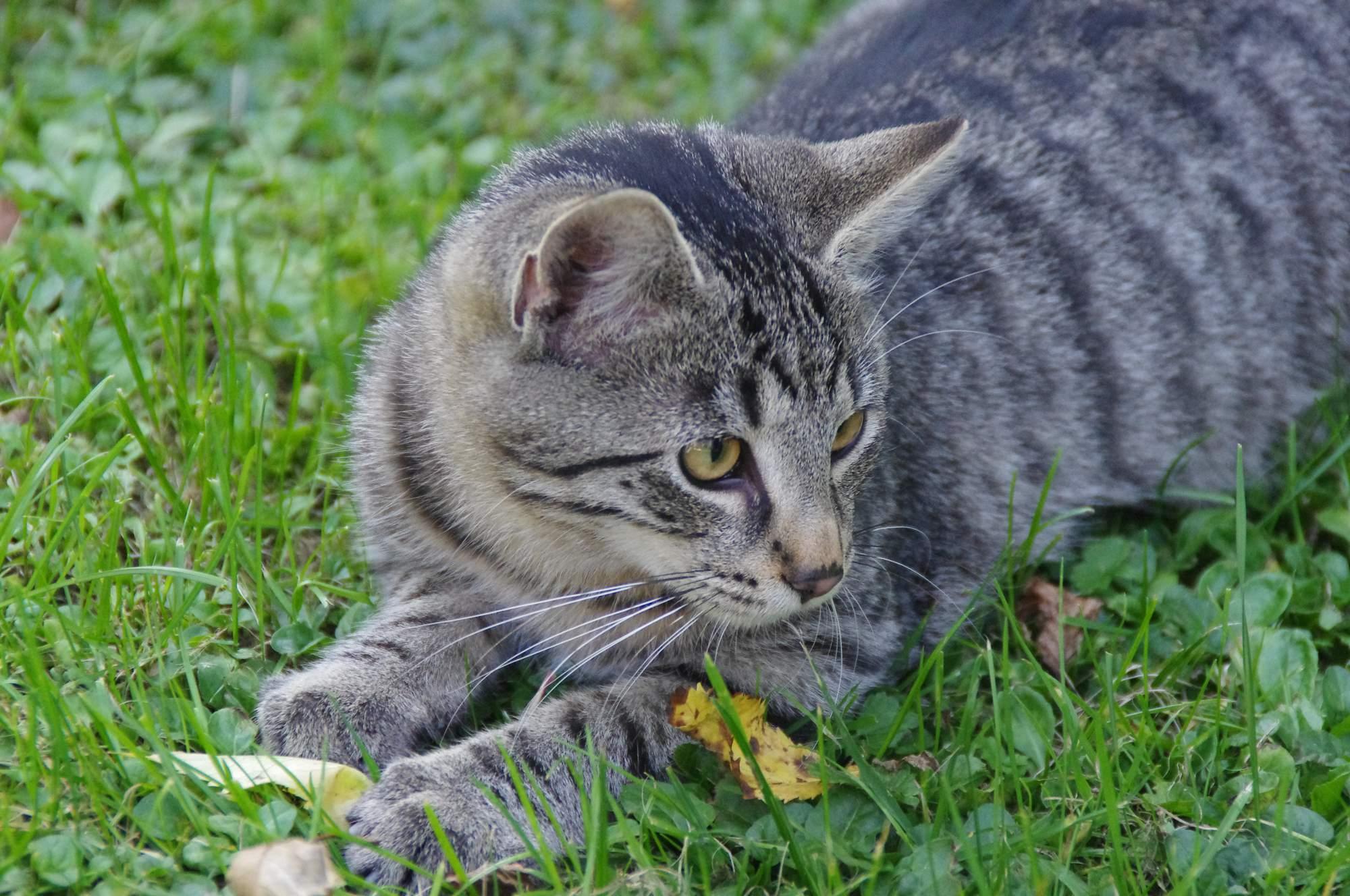 mačky datovania