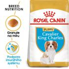 ROYAL CANIN  KAVALÍR JUNIOR