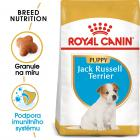 RC JACK RUSSELL JUNIOR